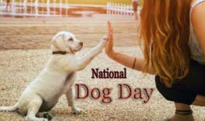 Dog Day Images